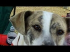 Grassroots Animal Rescue, Animal Adoption Drive In Mathiston, Mississippi 001