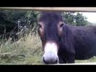 8 donkeys, a horse & a goat :D