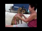 Playa Animal Rescue - Rayes