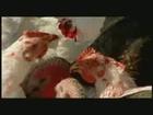 Animal Farm - VV Teaser 9